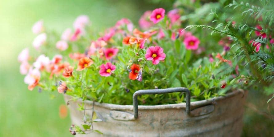 flower-tub-garden